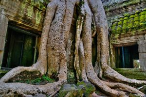 Ta  Prohm  8 by CitizenFresh