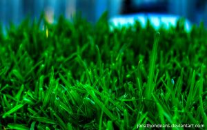 Grass HDR by jonathondeans