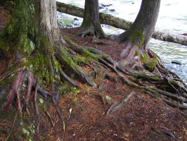 Rooted by PhotoAddict96
