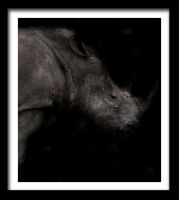 Photo - Rhino by emailandthings