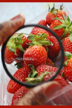 Strawberry by pinko0