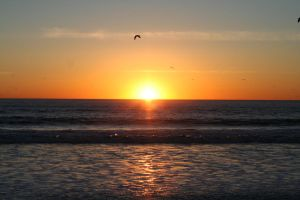 Venice Beach Sunset by dharris001