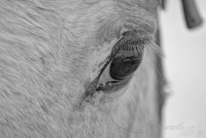 Equine Expressions - Aspen by sioranth