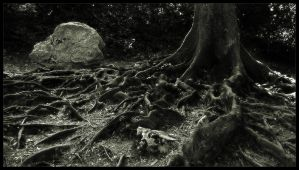 RooTs by ruslik