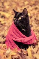 Carbon Copy in a Scarf by kilkennycat