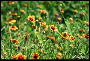 Texas wild flowers by TlCphotography730