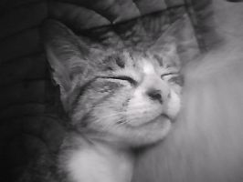my cat by mejllano