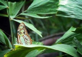 Watcher Among The Leaves by Nikki-vdp