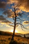 .:Skeleton Tree Sunrise II:. by RHCheng