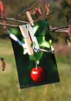 I'm in the mood for a cherry. by Rona-Keller