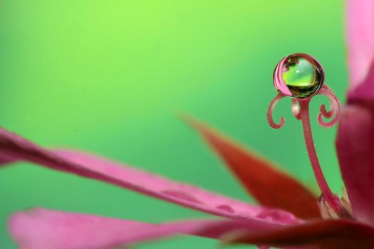 .: Droplet on  top :. by Katosu