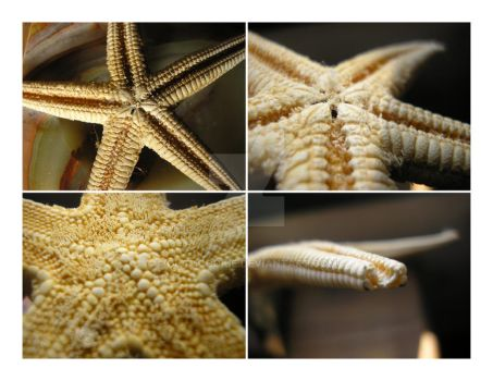 Sea star by glamcookie
