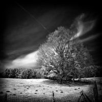 Spring Mood infrared by MichiLauke