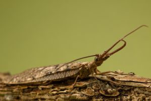 Dobsonfly by Brian-D