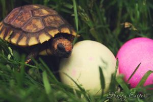 Happy Easter 2012 by prominent-portraits