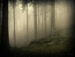 Grimm's Forest by Weissglut