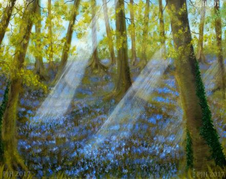 Bluebell Wood by PhilipHarvey