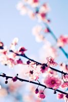 Early Spring II by ContainEmotion