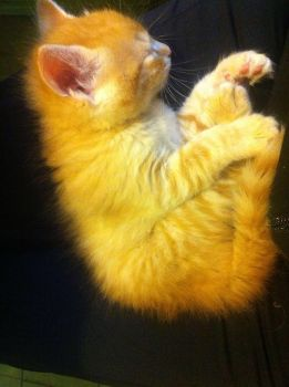 my cat toulouse when was kitten by Die-Rose