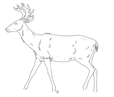 Deer lineart by hydraequus