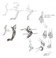 how to draw dragons: front leg by Kielrae