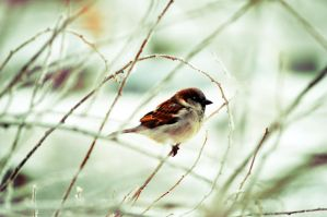 Little Bird 2 by Speacial-J-Cerial