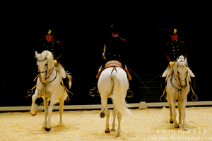 Lipizzaners - II by Summerly