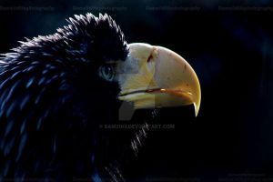 eagle portrait by Sam2103