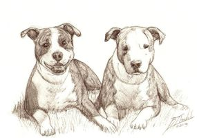 pitbulls by B-animal