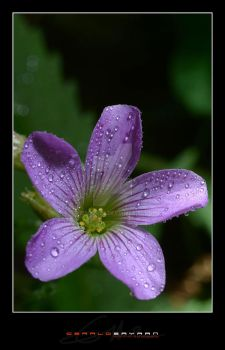 Tiny Flower 01 by TheSOAP22
