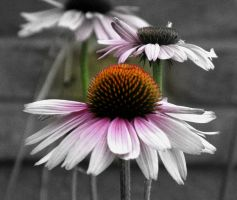 black white and color flower 3 by abramsje
