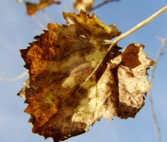 autumnleaf2 by vw1956stock