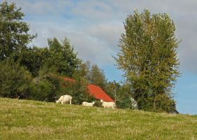 Red roof and sheep by piglet365