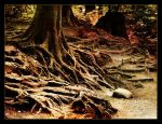 Of old trees and fairy tales by Lorien79