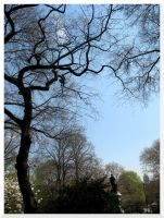 A Tree At The Central Park by Linduzki