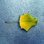 October leaves 1 by julia51