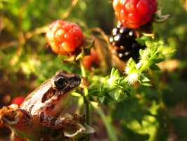 Tiny frog wants a berry by GeckoCatcher