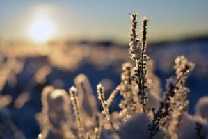 A Cold December Morning by Fridelisan