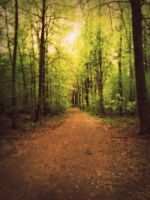 The road by L-JustinePhotography