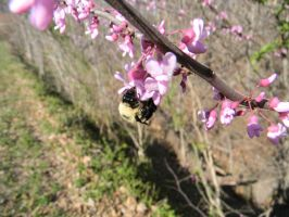My first Bumble Bee Pic by Perceptor