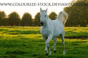 Grey Mare Stock 2 by Colourize-Stock