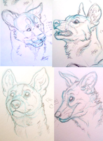 Quick Wild dog sketches by DawnFrost