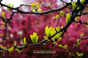 Leaves on a Pink Bed by confucius-zero