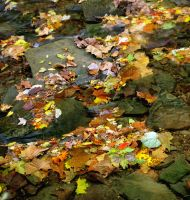 Leaf strewn creek by harrietsfriend
