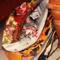 Cat in a bag 1 by RevelloDrive1630