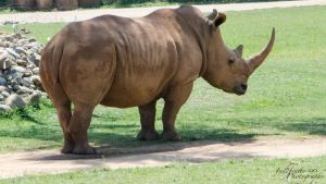 Rhino 01 by Indefinitefotography