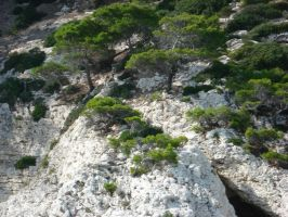 Trees on a cliff, Italy by Lea-Li