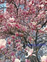 Project 365, Day 205: Abundant Blossoms by sandyandi146
