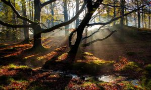 Enchanting Woods by bongaloid