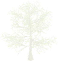 Snow White Pine Tree png by mysticmorning